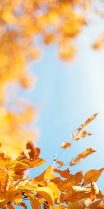 Les animations du mois d'octobre